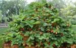 Как посадить клубнику в шинах